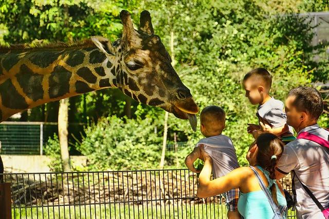 赤ちゃんと動物園